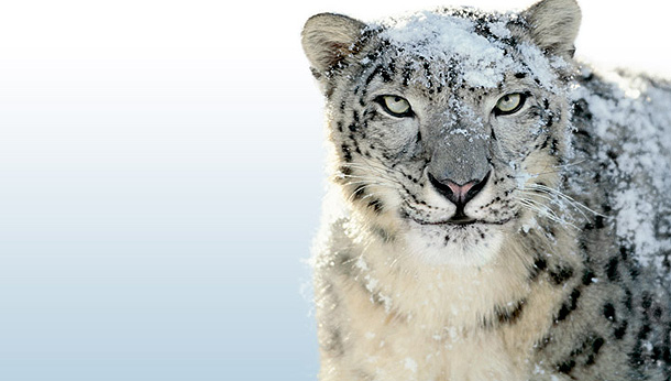 Mac OS X Snow Leopard Apple jetzt in Version 10.6.5