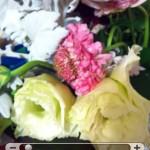 Dropbox Dropphox Galerie Foto iPhone Apple News Österreich Schweiz 4